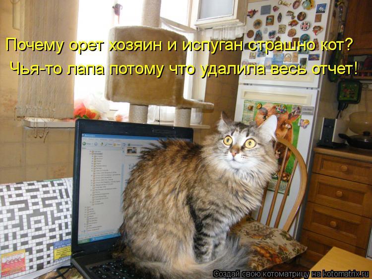 Котоматрица: Почему орет хозяин и испуган страшно кот? Чья-то лапа потому что удалила весь отчет!