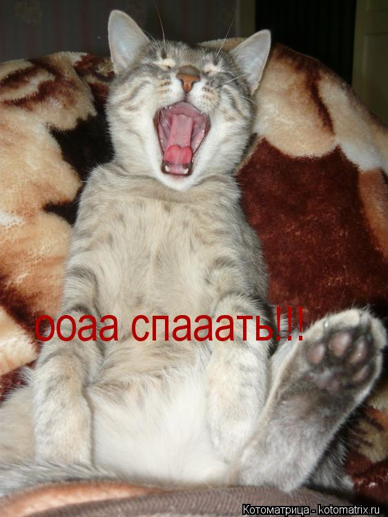 Котоматрица: ооаа спааать!!!