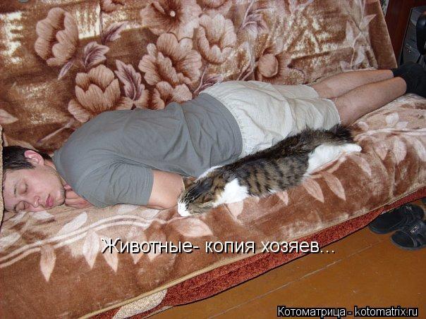 Котоматрица: Животные- копия хозяев...