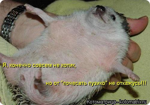 """Котоматрица: Я, конечно совсем не котик,   но от """"почесать пузико"""" не откажусь!!!"""
