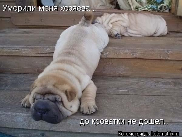 Котоматрица: Уморили меня хозяева... до кроватки не дошел..