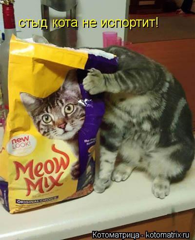 Котоматрица: стыд кота не испортит!