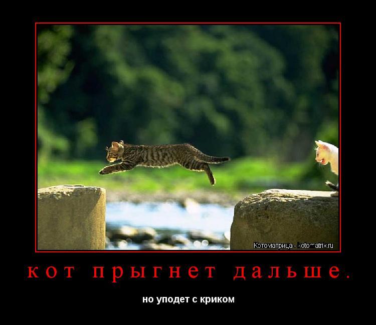 Котоматрица: кот прыгнет дальше. но уподет с криком