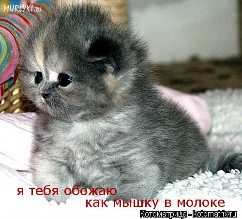 Котоматрица: я тебя обожаю как мышку в молоке