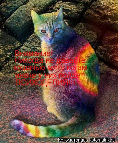 Котоматрица: Внимание!  Никогда не давайте кошачью мяту котам, иначе у них пойдёт ПСИХОДЕЛИЯ!!!