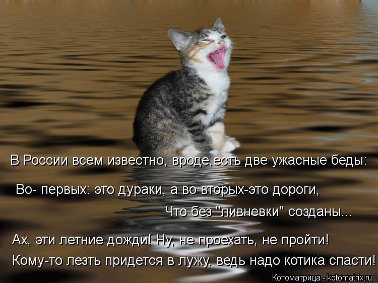"""Котоматрица: Во- первых: это дураки, а во вторых-это дороги, В России всем известно, вроде,есть две ужасные беды: Что без """"ливневки"""" созданы... Ах, эти летние"""