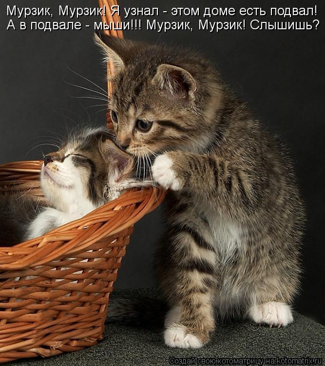 Котоматрица: Мурзик, Мурзик! Я узнал - этом доме есть подвал! А в подвале - мыши!!! Мурзик, Мурзик! Слышишь?