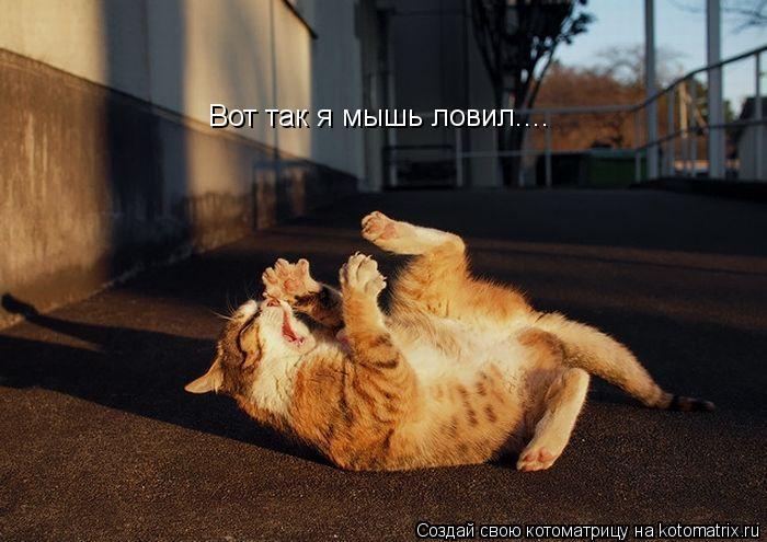 Котоматрица: Вот так я мышь ловил....