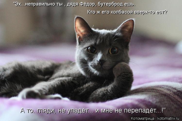 """Котоматрица: """"Эх...неправильно ты , дядя Фёдор, бутерброд ешь. Кто ж его колбасой вверх-то ест? А то. гляди, не упадёт... и мне не перепадёт...!"""""""