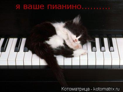 Котоматрица: я ваше пианино..........                  и я ваше пианино..........