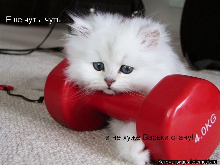 Котоматрица: Еще чуть, чуть и не хуже Васьки стану! Еще чуть, чуть...  и не хуже Васьки стану!