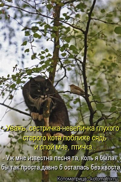 Котоматрица: - Уважь, сестричка-невеличка глухого старого кота,поближе сядь и спой мне, птичка.. - Уж мне известна песня та, коль я была бы так проста,давно