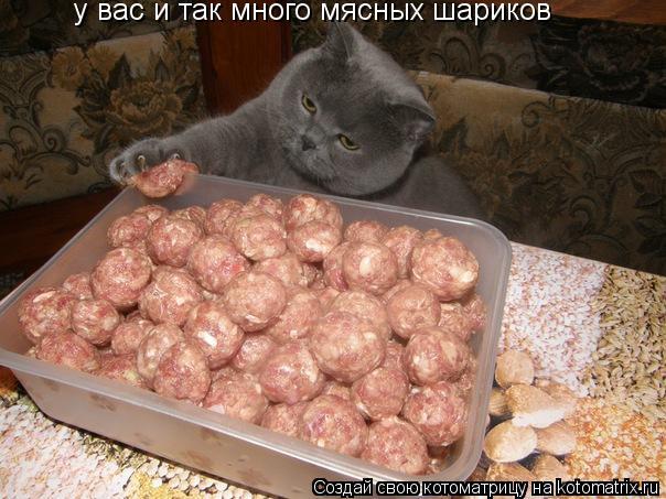 Котоматрица: у вас и так много мясных шариков