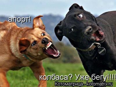 Котоматрица: апорт! колбаса? Уже бегу!!!!