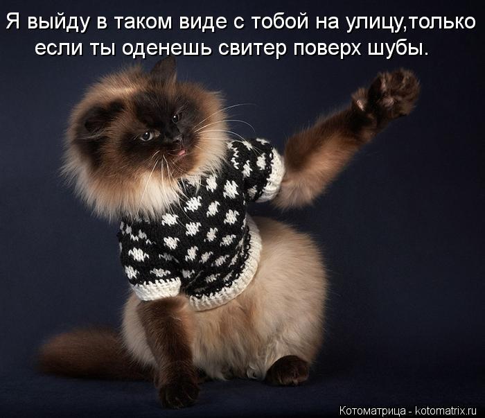 Котоматрица: если ты оденешь свитер поверх шубы. Я выйду в таком виде с тобой на улицу,только