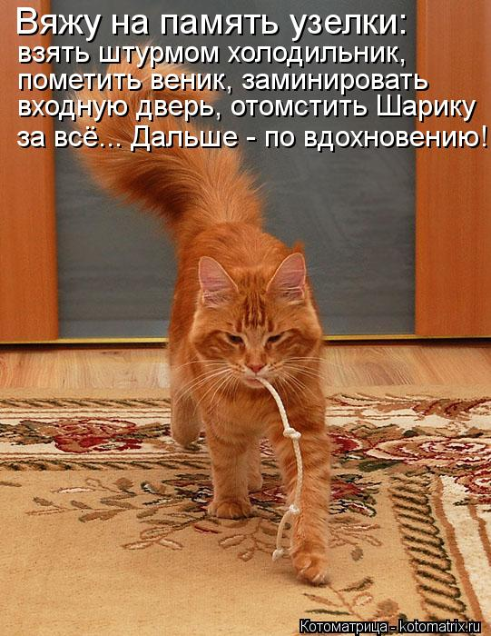 Котоматрица: Вяжу на память узелки: взять штурмом холодильник,  пометить веник, заминировать  входную дверь, отомстить Шарику за всё... Дальше - по вдохнов