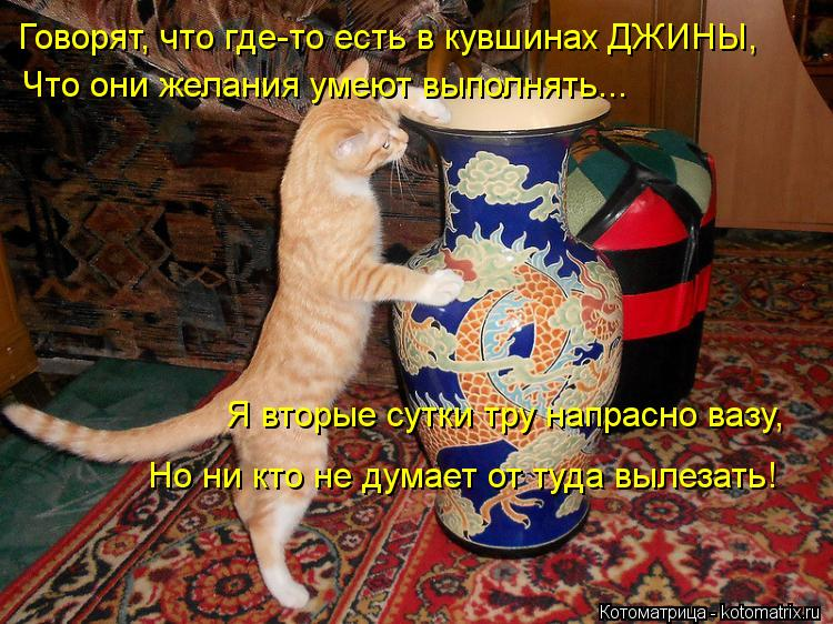 Котоматрица: Говорят, что где-то есть в кувшинах ДЖИНЫ, Что они желания умеют выполнять... Я вторые сутки тру напрасно вазу, Но ни кто не думает от туда выл