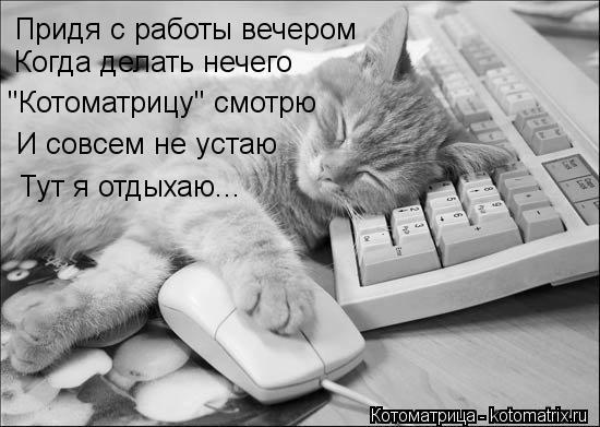 """Котоматрица: Придя с работы вечером  Когда делать нечего """"Котоматрицу"""" смотрю И совсем не устаю Тут я отдыхаю..."""