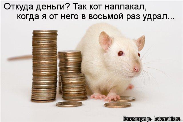 Котоматрица: Откуда деньги? Так кот наплакал, когда я от него в восьмой раз удрал...