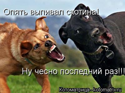 Котоматрица: Опять выпивал скотина! Опять выпивал скотина! Ну чесно последний раз!!!