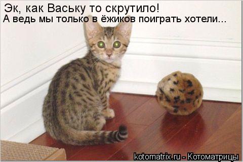 Котоматрица: Эк, как Ваську то скрутило! А ведь мы только в ёжиков поиграть хотели...