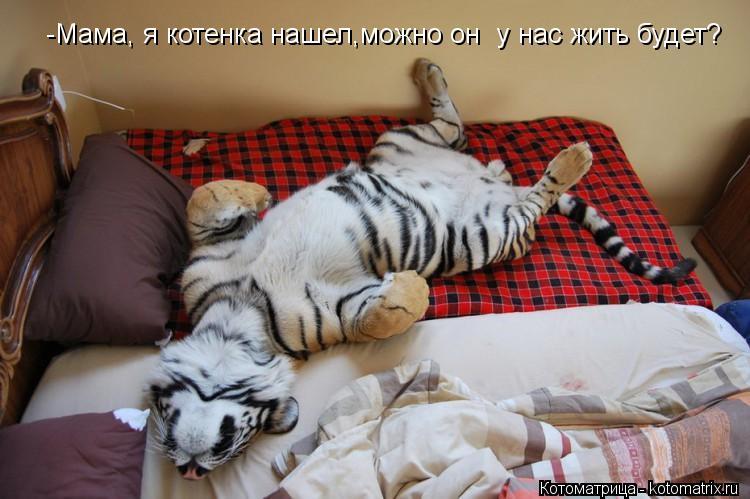 Котоматрица: -Мама, я котенка нашел,можно он  у нас жить будет?