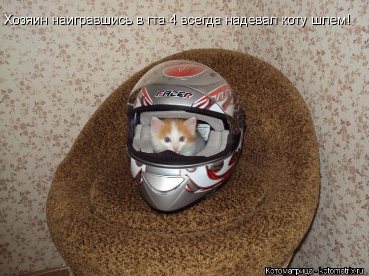 Котоматрица: Хозяин наигравшись в гта 4 всегда надевал коту шлем!