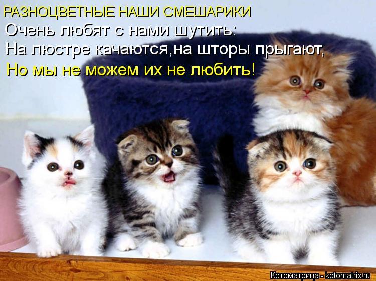 Котоматрица: РАЗНОЦВЕТНЫЕ НАШИ СМЕШАРИКИ Очень любят с нами шутить: На люстре качаются,на шторы прыгают, Но мы не можем их не любить!
