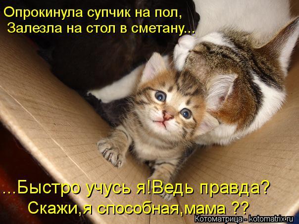 Котоматрица: Опрокинула супчик на пол, ...Быстро учусь я!Ведь правда? Залезла на стол в сметану... Скажи,я способная,мама ??