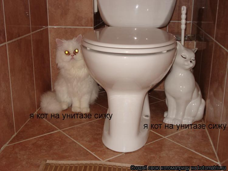 Котоматрица: я кот на унитазе сижу я кот на унитазе сижу
