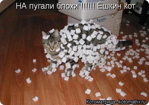 Котоматрица: НА пугали блохи !!!!!! Ёшкин кот