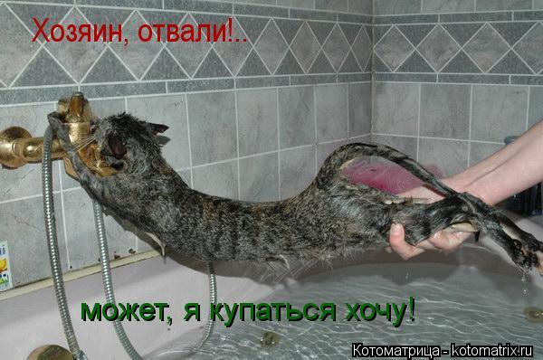 Котоматрица: Хозяин, отвали!..  может, я купаться хочу!
