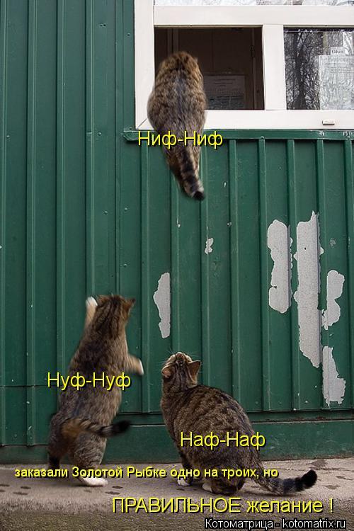 Котоматрица: Ниф-Ниф Нуф-Нуф Наф-Наф заказали Золотой Рыбке одно на троих, но  ПРАВИЛЬНОЕ желание !