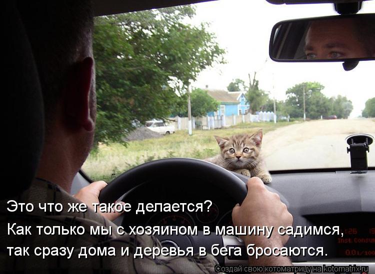 Котоматрица: Это что же такое делается? Как только мы с хозяином в машину садимся, так сразу дома и деревья в бега бросаются.