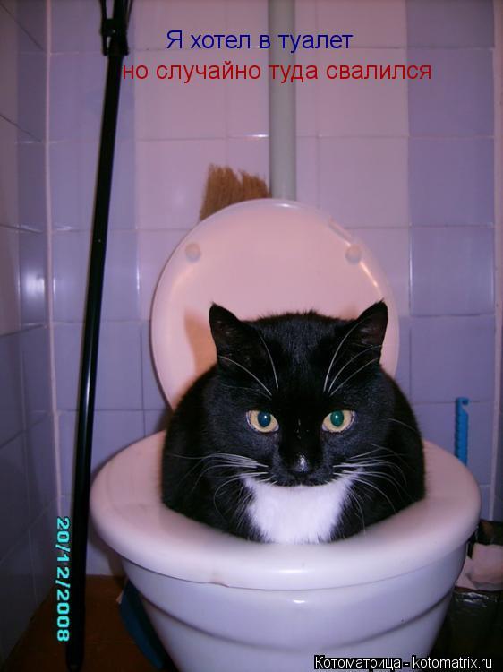 Котоматрица: Я хотел в туалет но случайно туда свалился