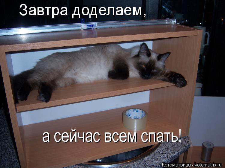 Котоматрица: Завтра доделаем, а сейчас всем спать!