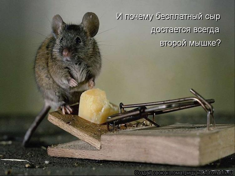 Котоматрица: И почему бесплатный сыр  достается всегда второй мышке?