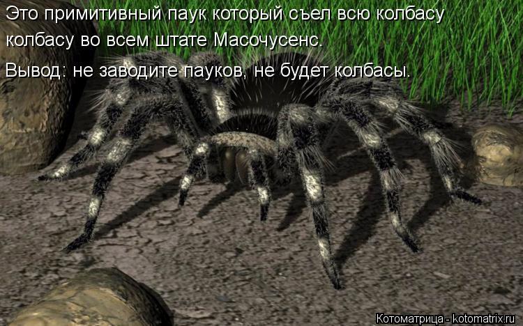 Котоматрица: Это примитивный паук который съел всю колбасу  Это примитивный паук который съел всю колбасу  колбасу во всем штате Масочусенс. колбасу во
