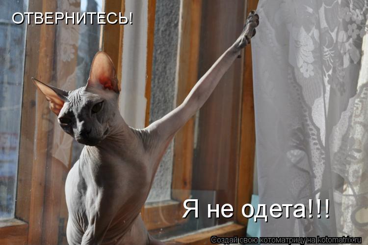 Котоматрица: ОТВЕРНИТЕСЬ! Я не одета!!!