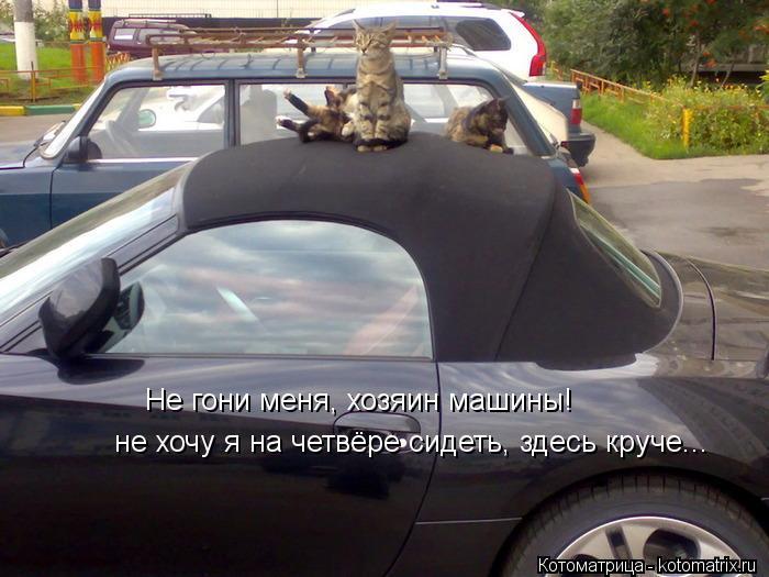 Котоматрица: Не гони меня, хозяин машины! не хочу я на четвёре сидеть, здесь круче...