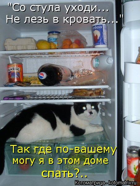 """Котоматрица: Не лезь в кровать..."""" """"Со стула уходи... Так где по-вашему могу я в этом доме спать?.."""
