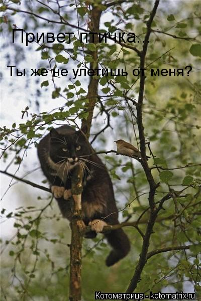 Котоматрица: Привет птичка... Ты же не улетишь от меня?