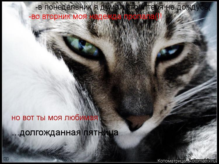 Котоматрица: -в понедельник я думал что я тебя не дождусь( -во вторник моя надежда пропала(!! но вот ты моя любимая ...долгожданная пятница