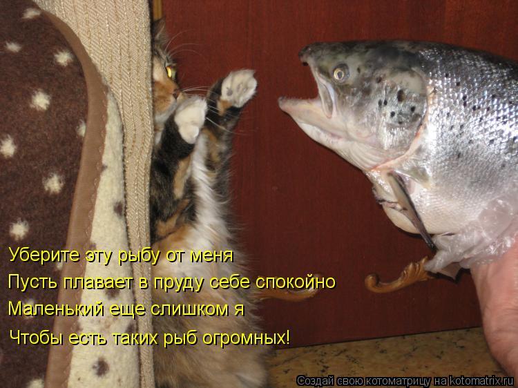 Котоматрица: Уберите эту рыбу от меня Пусть плавает в пруду себе спокойно Маленький еще слишком я Чтобы есть таких рыб огромных!