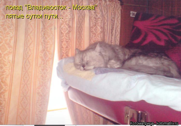 """Котоматрица: поезд """"Владивосток - Москва"""" пятые сутки пути..."""