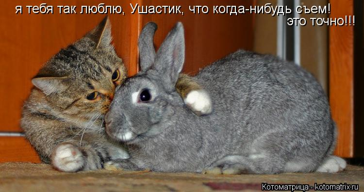 Котоматрица: я тебя так люблю, Ушастик, что когда-нибудь съем! это точно!!!