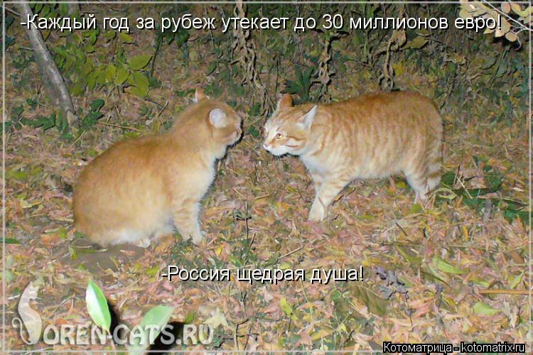 Котоматрица: -Россия щедрая душа! -Каждый год за рубеж утекает до 30 миллионов евро!