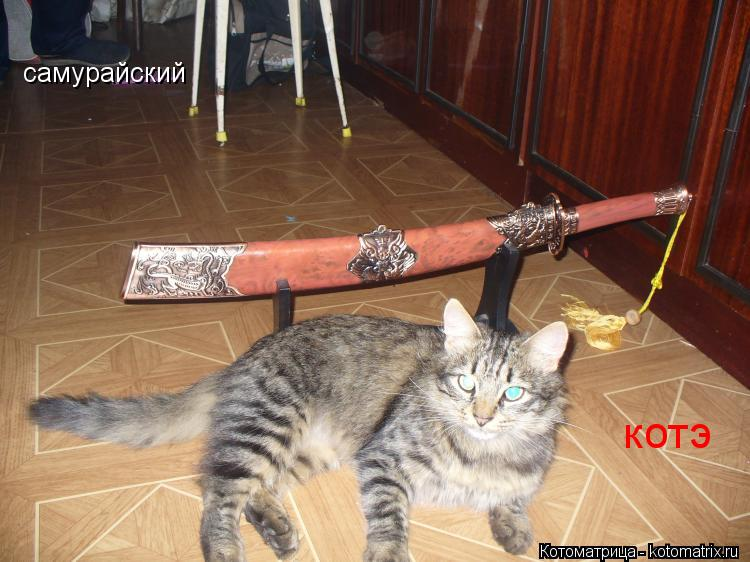 Котоматрица: самурайский котэ