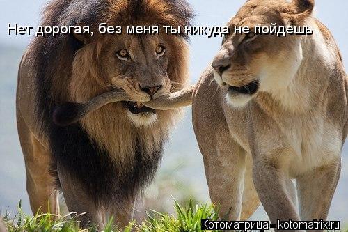 Котоматрица: Нет дорогая, без меня ты никуда не пойдешь