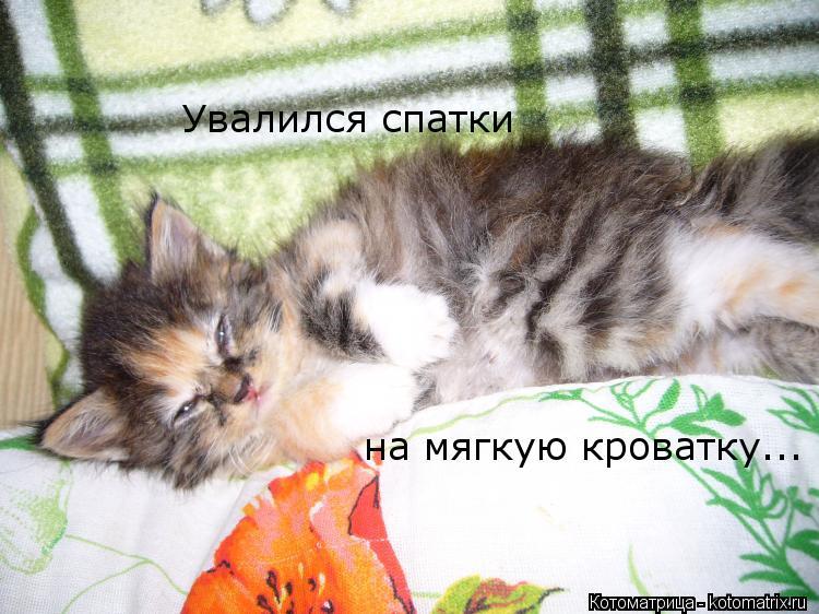 Котоматрица: на мягкую кроватку... Увалился спатки